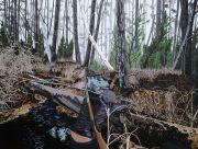 """<p>Chen Fei,<em isrender=""""true""""> Inexpedient Hunter</em>, 2014, acrylic on linen, 180 x 240 cm</p>"""